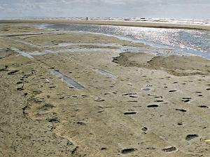 Formby Footprints Stone Age