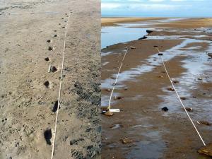 Formby Footprints
