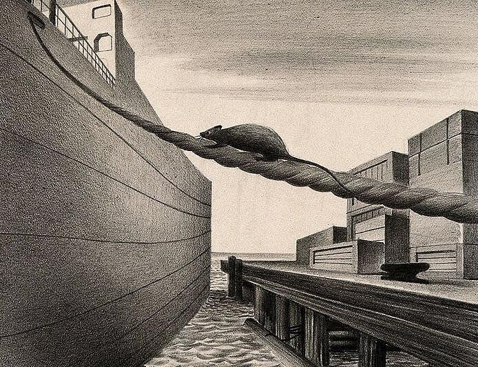 Black Death rat ship